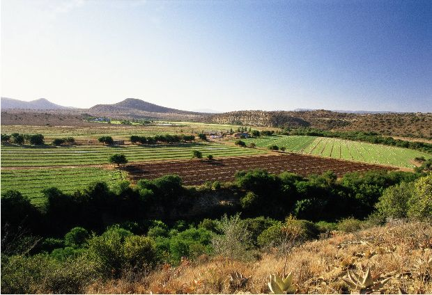 Farm in Nelson Mandela Bay