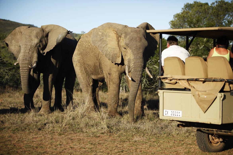 Addo Elephant Park Tour