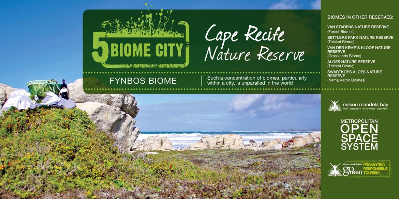 Fynbos Biome Port Elizabeth