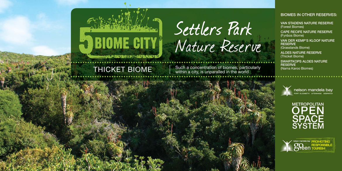 Thicket Biome Port Elizabeth