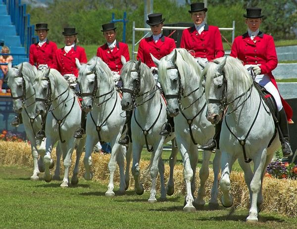 South African Lipizzaners in Nelson Mandela Bay