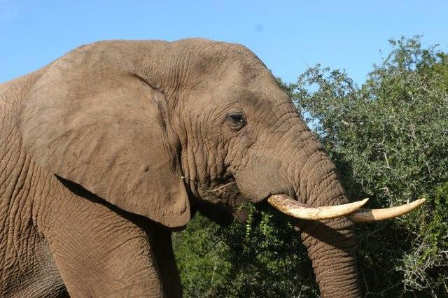 Addo Elephant National Park - Full Day Tour (Code FD01)