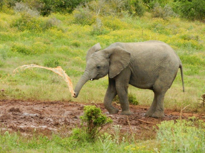 Addo Elephant National Park - Half Day Tour (Code HD01)