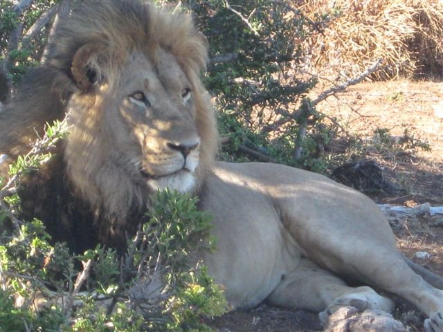 Addo Elephant National Park and Tooth & Claw tour - Full Day Tour