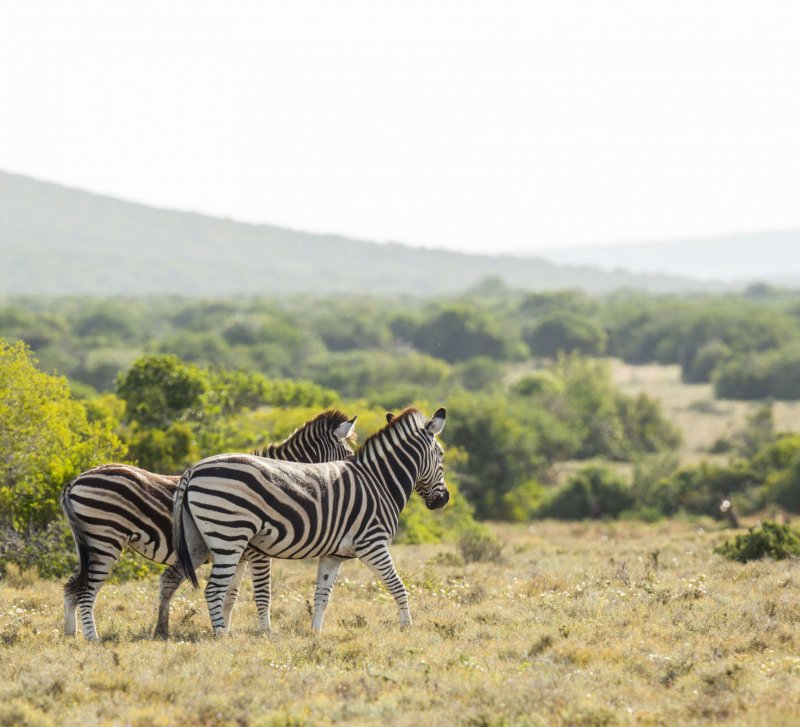 ADDO WILDLIFE ECO WALKING SAFARI-2