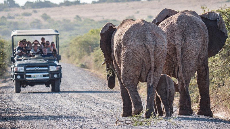 Big 5 Day Safari at Hlosi Game Lodge -2