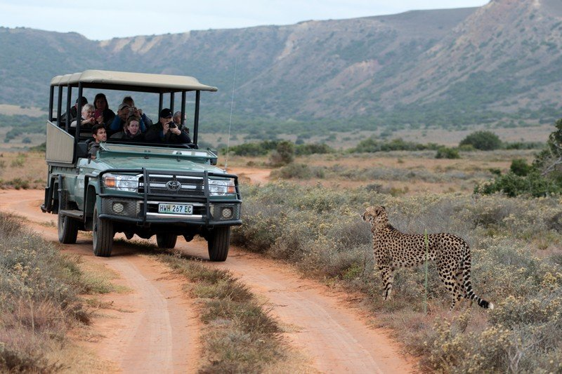Big 5 Day Safari at Hlosi Game Lodge -3