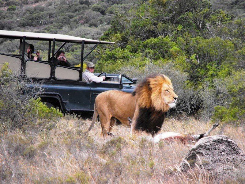 Big 5 Day Safari at Hlosi Game Lodge