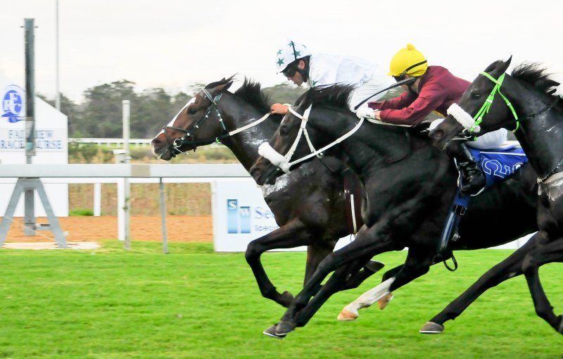 Event: Live thoroughbred horseracing at Fairview ...